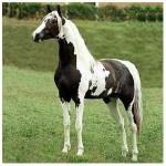 """Apostilas – """"Criação e Doma de Cavalos"""